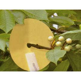 Piège contre la mouche de la cerise (les 2)