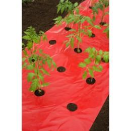 Film de paillage tomate rouge trou découpé  0,95 x 5 m