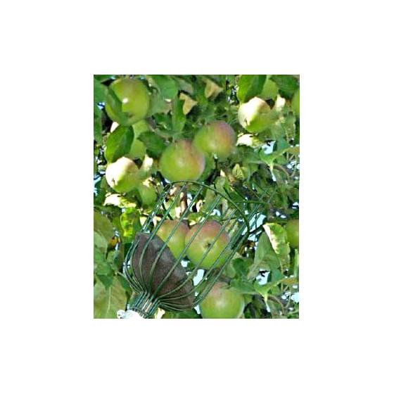 Cueille fruit téléscopique