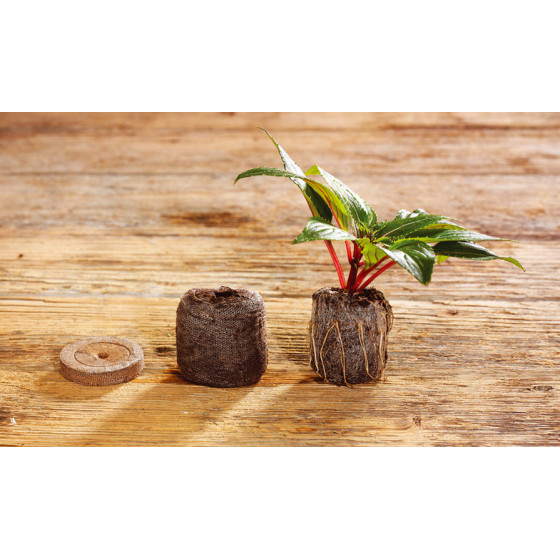 Pastilles de coco pour semis