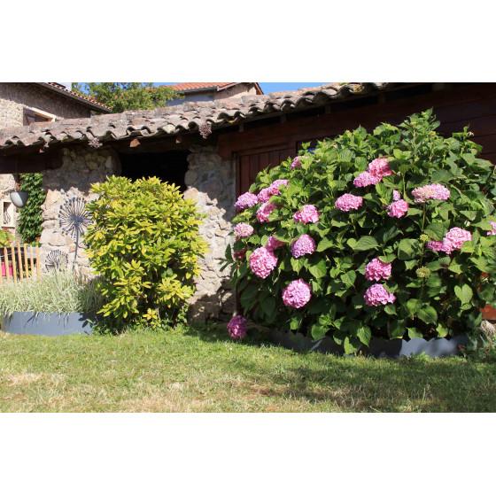 le rose des hortensias subliment le gris de la bordure en métal