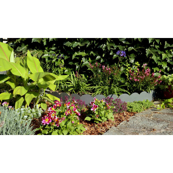 la bordure de jardin se dissimule dans ce bosquet de fleurs