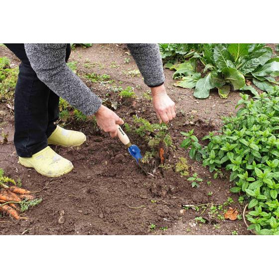 jardinière qui ramasse des carottes à l'aide de la gouge à désherber