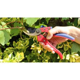 sécateur arbuste fruitier